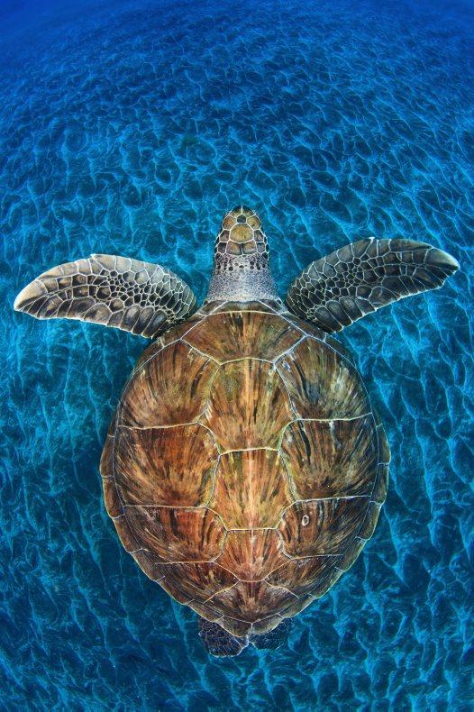 Turtle gem