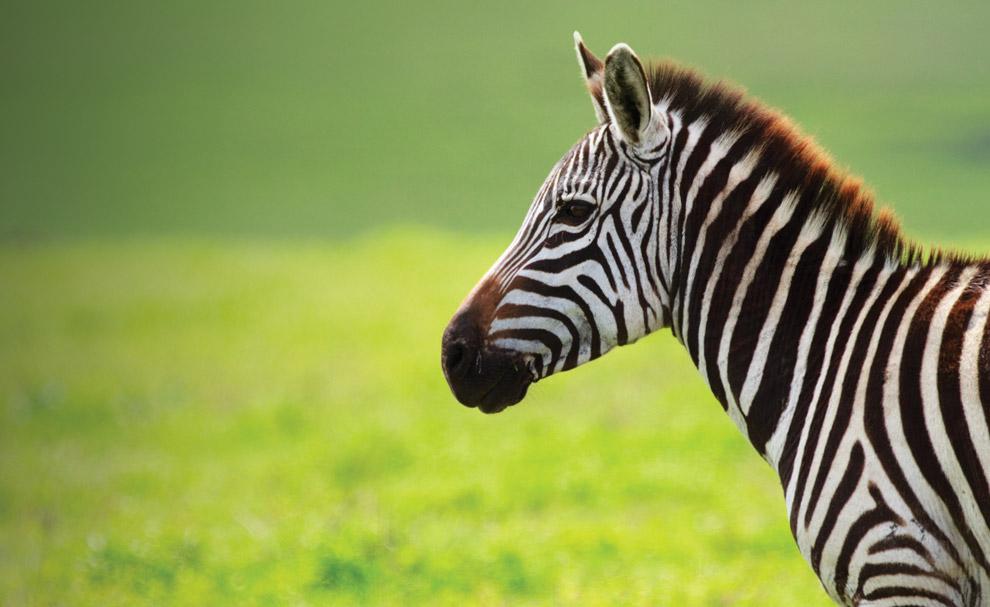 homepage_Wildlife
